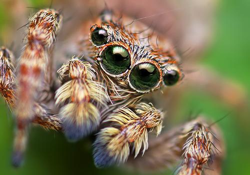 Spider (c) Thomas Shahan